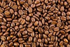 Fasole odizolowywać na białym tle kawa piją pocztówkowego projekta pojęcie Obraz Stock