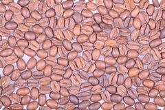 Fasoli arabica kawa Fotografia Stock