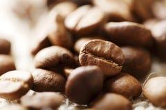 fasoli coffe Obrazy Stock