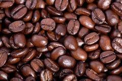 fasoli coffe Obraz Stock