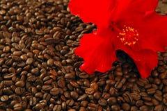 fasoli coffe kwiatu poślubnika czerwień wznosząca toast Obraz Royalty Free