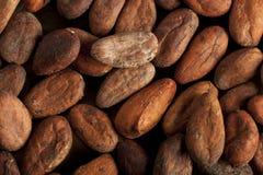 Fasoli kakaowy tło Obraz Stock