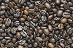 Fasoli kawowy tło zdjęcia royalty free