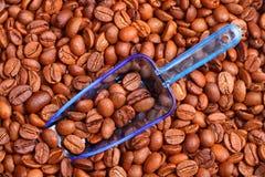 fasoli miarka błękitny kawowa Zdjęcie Stock