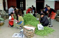 fasoli porcelany zieleni pengzhou pracownicy Obraz Royalty Free