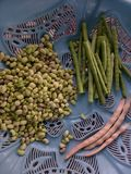 Fasolki Szparagowe, Unpealed fasole I Wysuszone Unpealed fasole w garnku! zdjęcie royalty free