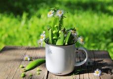 Fasolki szparagowe z dzikimi kwiatami Zdjęcia Royalty Free