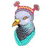 Fasonuje ptasią zwierzęcą ilustrację, antropomorficzny projekt, gołąbka, kapelusz, wektor, ilustracja, ręka rysunku obrazek Fotografia Royalty Free