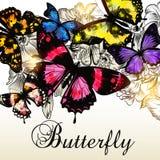 Fasonuje wektorowego tło z pięknymi kolorowymi motylami fo Obrazy Stock