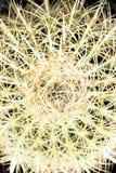 Fass-Kaktus-Abschluss oben Lizenzfreie Stockfotografie