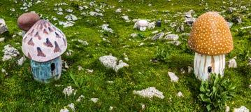 Fass-Pilze auf dem Gebiet Stockbilder