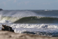 Fass-Welle mit Strand-Treibholz stockfotografie
