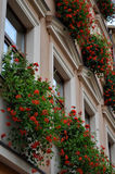 Fassade des Gebäudes mit Blumen auf Fenstern Lizenzfreie Stockfotos