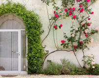 Fassade des historischen Gebäudes bedeckt durch Efeu und Rosen Lizenzfreie Stockbilder