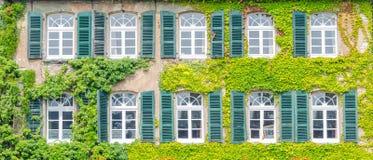 Fassade, die mit Kletterpflanzen grünt Stockfoto
