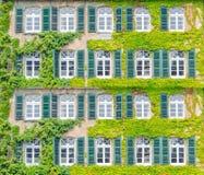 Fassade, die mit Kletterpflanzen grünt Lizenzfreies Stockbild