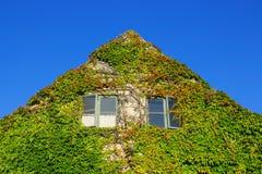 Fassade eines Hauses bedeckt mit Efeu Stockfoto