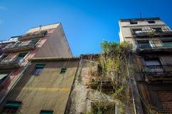 Fassade mit überwuchertem Efeu Lizenzfreie Stockfotos