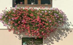 Fassade mit Blumen Lizenzfreie Stockbilder