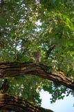 Fassbinder-Falke in einem Baum Stockfotos