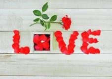 Fassen Sie die Liebe ab, die mit den rosafarbenen Blumenblättern, Rotrose und Kasten mit singl geschrieben wird Lizenzfreie Stockfotografie