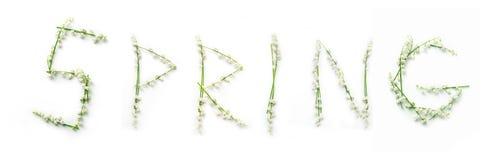 Fassen Sie Frühling mit Lilienblumen auf weißem Hintergrund ab Stockfoto
