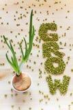 Fassen Sie Grow gemacht von Mungobohnen ab, vertikal Wachsende Zwiebel mit Beaut stockbilder