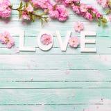 Fassen Sie Liebe ab und fassen Sie von den rosa Mandelblumen auf Türkisholz ein Stockbild