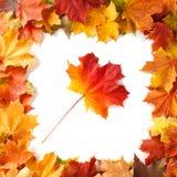 Fassen Sie Rahmen des bunten Herbstlaubs ein, der auf Weiß lokalisiert wird Stockbild