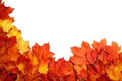 Fassen Sie Rahmen des bunten Herbstlaubs ein, der auf Weiß lokalisiert wird Lizenzfreie Stockfotos