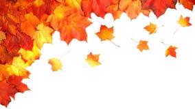 Fassen Sie Rahmen des bunten Herbstlaubs ein, der auf Weiß lokalisiert wird Lizenzfreies Stockfoto