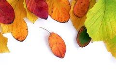 Fassen Sie Rahmen des bunten Herbstlaubs ein, der auf weißem backgro lokalisiert wird Lizenzfreie Stockbilder