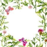 Fassen Sie Rahmen mit wilden Kräutern, Wiesenblumen und Schmetterlingen ein watercolor Lizenzfreies Stockfoto
