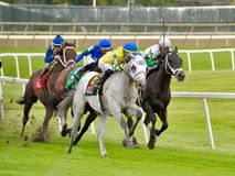 Fast and Accurate. Jose Ortiz, taking the lead on this super fast white horse on the turf royalty free stock photos