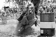 Fast Barrel Racing Turn - B&W. A rodeo barrel racing horse and contestant explode the arena sand as they gallop fast into a turn during a well-attended outdoor royalty free stock photos