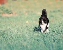 Beautiful fast cat fun running on green summer meadow Royalty Free Stock Photo