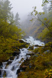 Fast and cold mountain river flowing between mossy rocks and green trees in Altai Republic Stock Photography