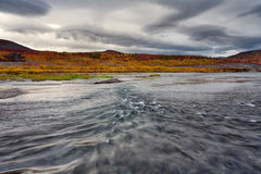 The fast current on the river and the autumn scenery around. Polar Urals. The River Sob. Russia Royalty Free Stock Image