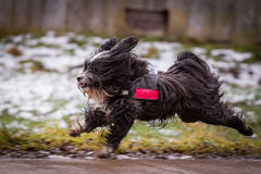 Fast dog Stock Images