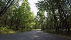 Fast driving through autumn forest road stock video