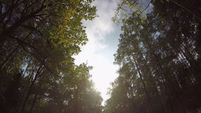 Fast driving through autumn forest road stock footage