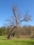 Fast fallender Baum Stockbilder