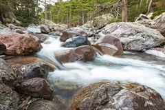 Fast flödande Asco flod i Korsika royaltyfri bild