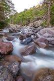 Fast flödande Asco flod i Korsika Arkivfoton