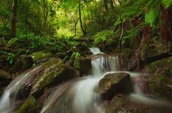 Fast flödande flodliten vik i mörk skog Arkivfoto