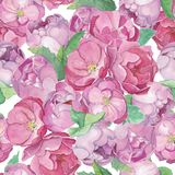 Fast flöde för för Aqwarelle rosor och pioner stock illustrationer