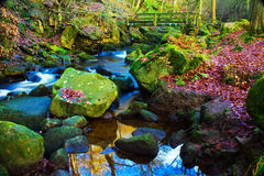 Fast flowing brook. A fast flowing brook  cascading over rocks Royalty Free Stock Photo