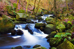 Fast flowing brook Royalty Free Stock Image