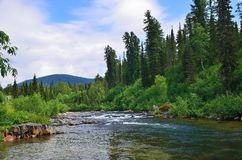 Fast flowing mountain river among dense forests and huge stones. Beautiful sunny summer landscape. Fast flowing mountain river among dense forests and huge Royalty Free Stock Photography