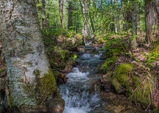 Fast Flowing Mountain Runoff Stream Royalty Free Stock Photography
